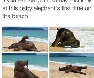 elephant, cute, and beach image