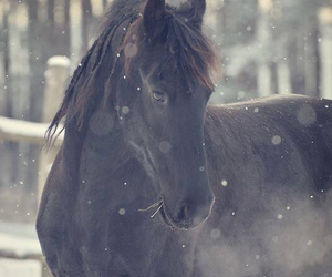 cold, horse, and beautiful image