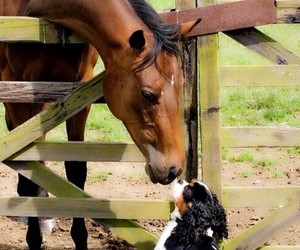 horse, dog, and friends image