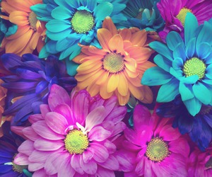 flowers, pink, and colors image