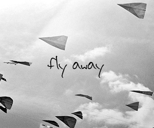 fly, black and white, and away image