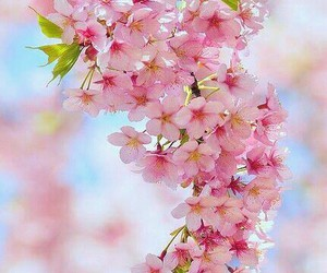 flowers pink cute image