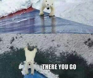 funny, bear, and lol image