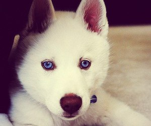dog and pretty image