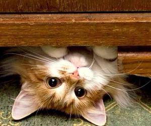 cat, cute, and meow image