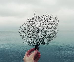 sea, ocean, and tree image