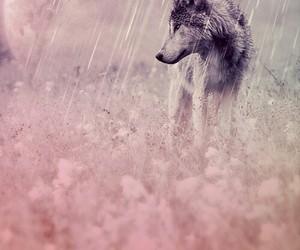 wolf, animal, and moon image