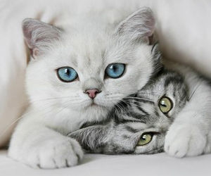 animals, blue, and couple image