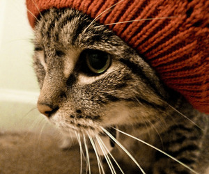 cat, hipster, and tumblr image