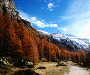 trees, forest, and mountain image
