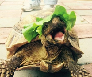 funny, cute, and turtle image
