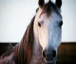 beautiful, horse, and lovely image