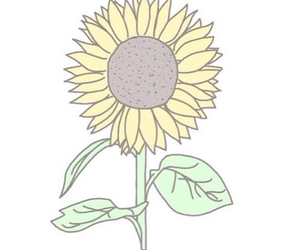 sunflower, overlay, and flowers image