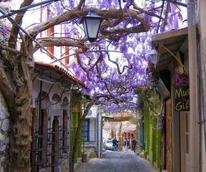 flowers, Greece, and purple image