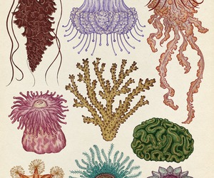art, ocean, and jelly fish image