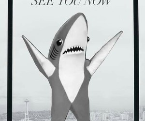 funny, grey, and shark image