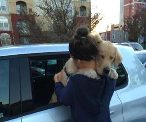 dog, cute, and hug image