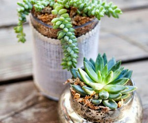 cool, flower pot, and plants image
