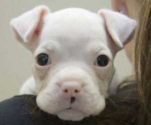 animals, cute face, and cute puppy image