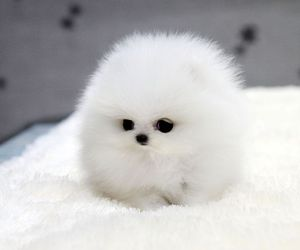 cute, dog, and white image