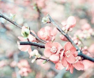 blossom and floral image