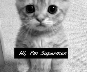 cat, hi, and superman image