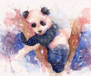 animal, bear, and panda image