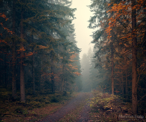 autumn, Dream, and fall image