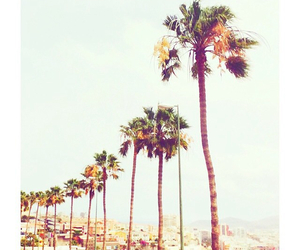 beach, holiday, and palmtrees image