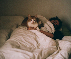 cat, boy, and sleep image