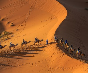 africa, animals, and desert image
