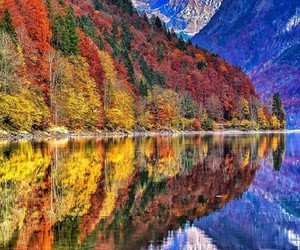 autumn, ♥, and forest image
