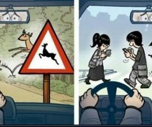car, danger, and deer image