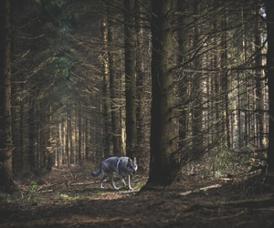 animals, forest, and indie image