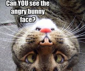 funny, cat, and bunny image