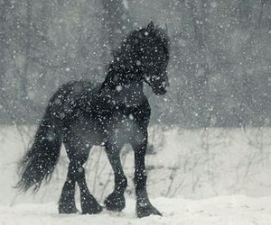 horse, winter, and magical image