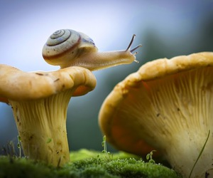 fungus, green, and snail image
