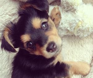 amor, perrito, and cute image