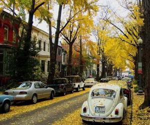 autumn, photography, and street image