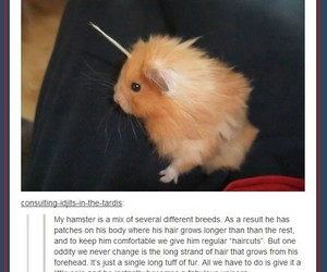 awww, hamster, and pet image