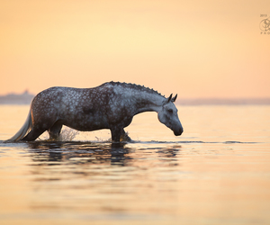 horse, water, and ocean image