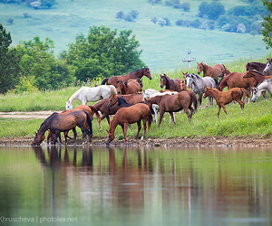 horses and summer image
