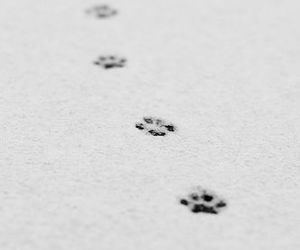 snow, animal, and cat image