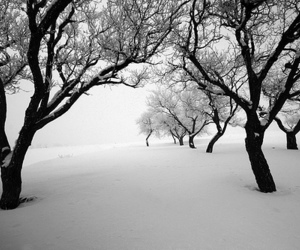 tree, snow, and winter image