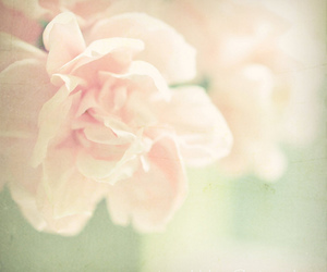 flower, photography, and love image
