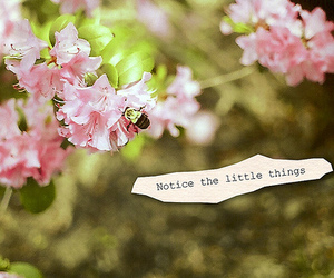 flowers, notice, and pink image