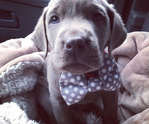 adorable, bow ties, and classy image
