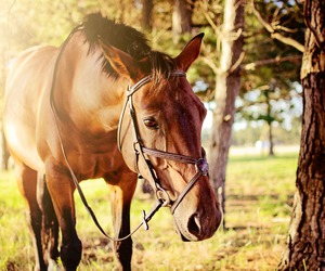 animal, horse, and sweet image