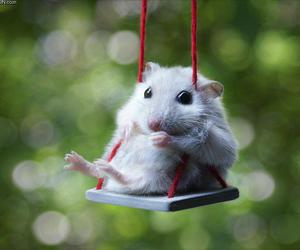 hamster, lovely, and cute image