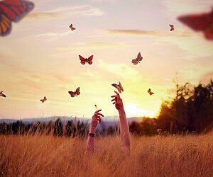 butterfly, sky, and freedom image